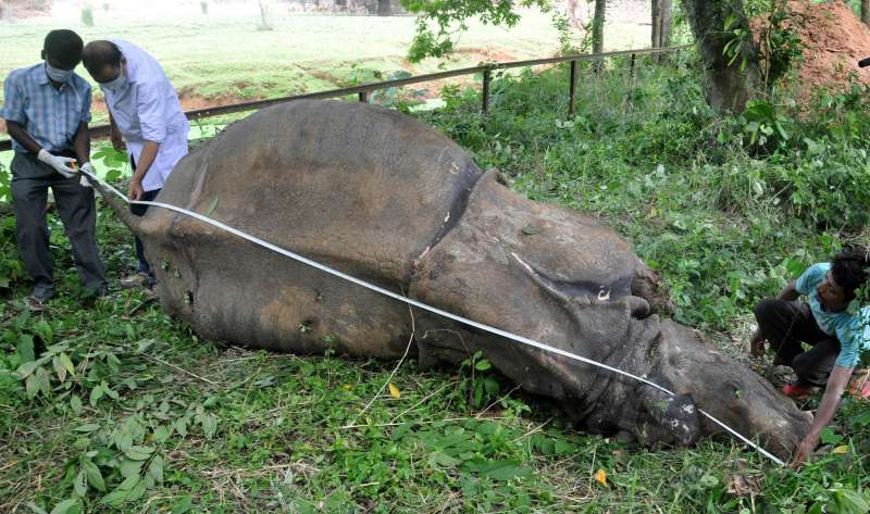 Doctors and zoo officials examine the body of a 40-year-old female one horned Rhino at Assam State Zoo premises in Guwahati, on Sept. 18, 2014. (Photo: IANS)