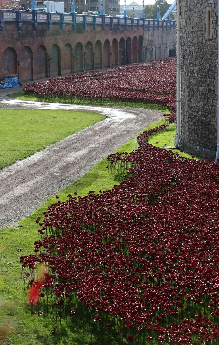 """The ceramic poppies, part of an art installation """"Blood Swept Lands and Seas of Red"""" in the moat of the Tower of London, in London, Britain. By its completion on Armistice Day in 2014, the moat will contain 888,246 ceramic poppies, each of which symbolizes a military fatality in the World War I"""
