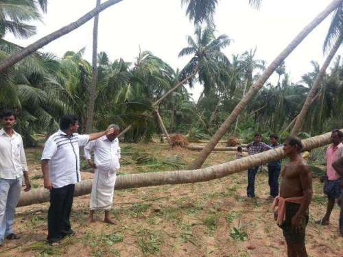 Uprooted trees in Srikakulam district of Andhra Pradesh through which cyclone Phalin passed last evening, on Oct. 13, 2013.FILE PHOTO