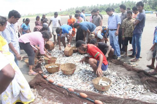 The ramponkars -​ fishermen​ belonging to a traditional fishing community with their catch on Caranzalem beach, Goa, on Sept 18, 2014. (Photo: IANS)