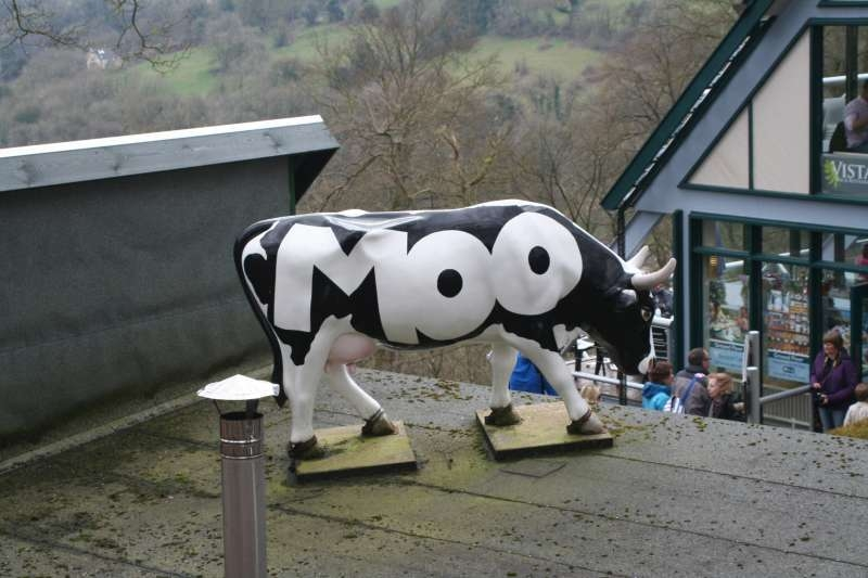 Moo-ving series of cow-on-the-run tales