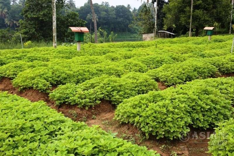 Rasa Gurukul at Chalakudi in south Indian state pf Kerala