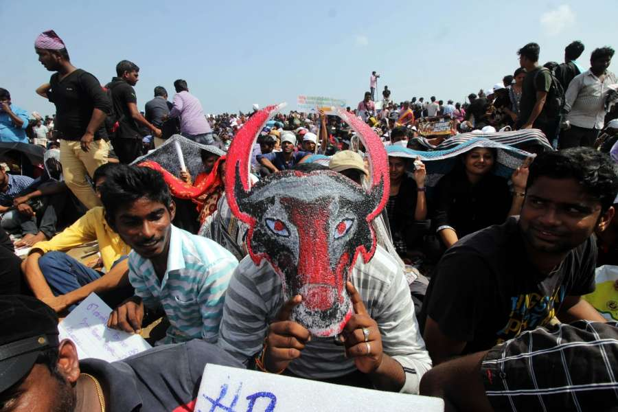 Chennai: People in large numbers stage a demonstration in favour of Jallikattu in Chennai on Jan 21, 2017. (Photo: Parthibhan/IANS) by .