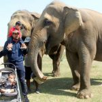 Churmura: Indian cricketer Yusuf Pathan with his family visit elephant conservation and rehabilitation centre in Churmura district of Mathura on March 17, 2017. (Photo: IANS) by .