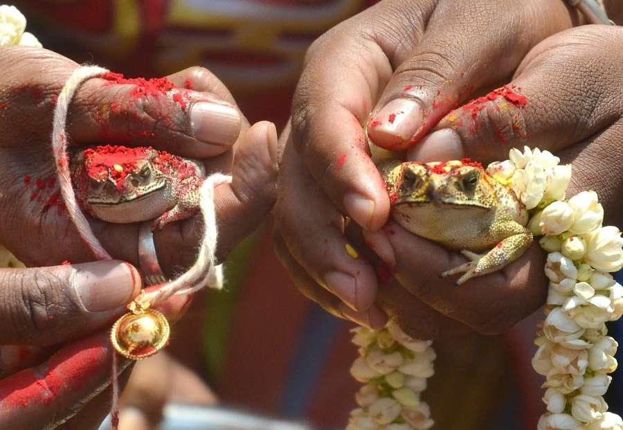 Bengaluru: Karnataka Janapara Vedike members conduct marriage of frogs so as to please the rain god in Bengaluru on March 23, 2017. (Photo: IANS) by .
