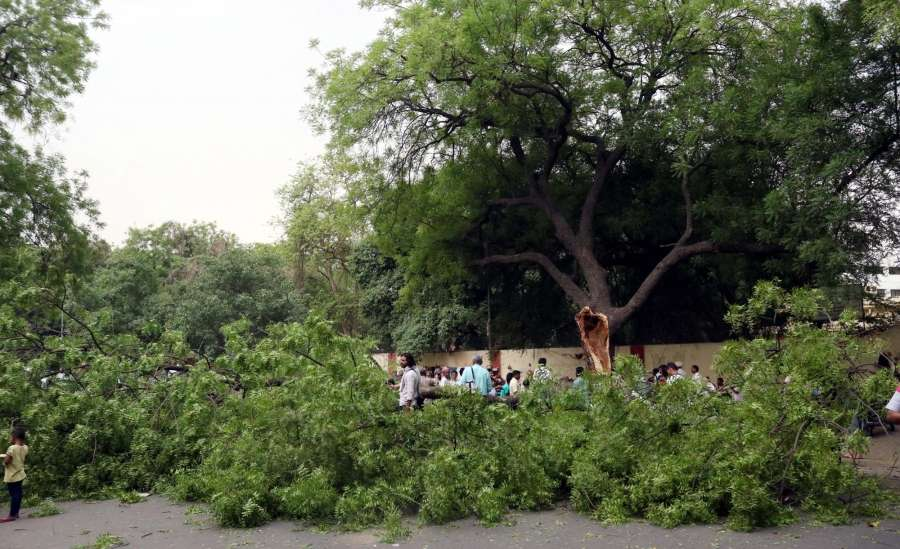 New Delhi: A tree falls on a car parked under it during a storm that hit New Delhi on May 3, 2017. (Photo: Bidesh Manna/IANS) by .