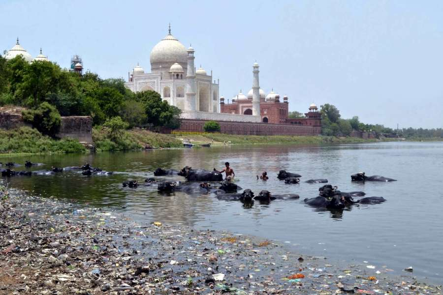 Agra: A view of polluted Yamuna river flowing by the Taj Mahal in Agra on June 5, 2017. (Photo: Pawan Sharma/IANS) by .