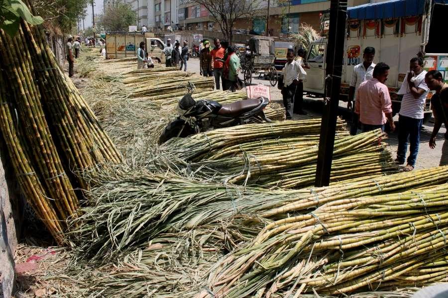 Nagpur: Sugarcane arrive at a Nagpur market on March 30, 2017. (Photo: IANS) by .