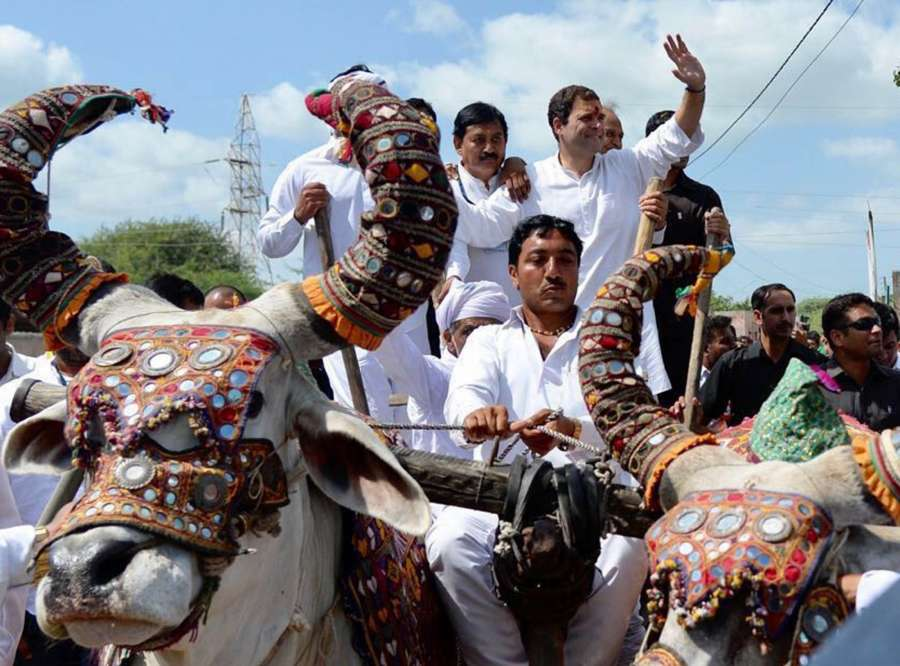 Hanjadapar: Congress Vice President Rahul Gandhi rides a bullock cart during a road show at Hanjadapar village in Dwarka district of Gujarat on Sept 25, 2017. (Photo: IANS) by .