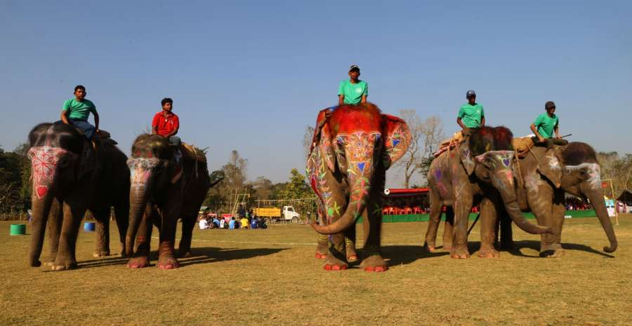 CHITWAN, Dec. 29, 2017 (Xinhua) -- Elephants get ready for the elephant beauty contest during the 14th Elephant Festival in Sauraha, a tourism hub in southwest Nepal's Chitwan district, Dec. 29, 2017. The five-day event, organized by the Regional Hotel Association of Sauraha in Chitwan National Park, aims to bring humans closer with elephants, encourage wildlife protection and conservation and promote tourism in the region. (Xinhua/Sunil Sharma/IANS) by .