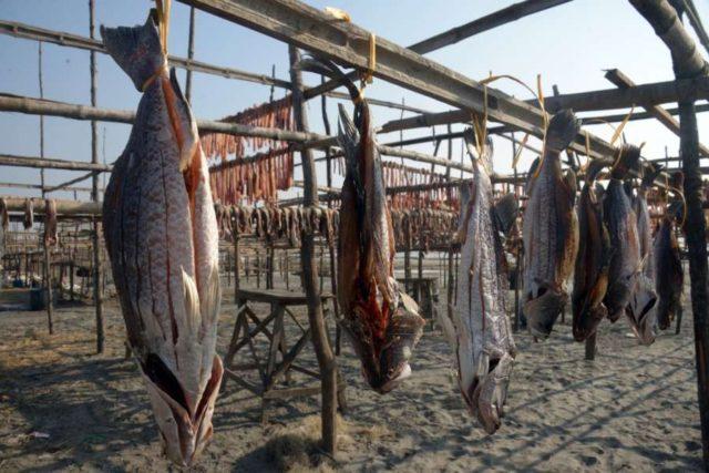 KUAKATA, Jan. 7, 2018 (Xinhua) -- Fish are dried in the sun at Kuakata in southeast Bangladesh's Patuakhali district, Jan. 5, 2017. (Xinhua/Salim Reza/IANS) by .