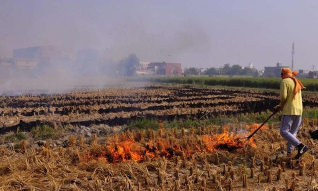 Amritsar: Stubble being burnt in a field on the outskirts of Amritsar on Oct 13, 2017. (Photo: IANS) by .