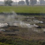 Amritsar: Paddy stubble being burnt in a field on the outskirts of Amritsar, on Oct 12, 2018. (Photo: IANS) by .
