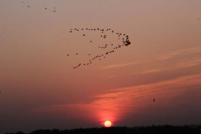 Santa Cruz: A murmuration of birds during sunset in Goa's Santa Cruz village on Oct 30, 2018. (Photo: IANS) by .