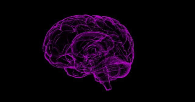 Brain. by .
