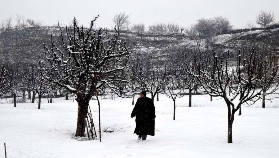 Baramulla: Jammu and Kashmir receives fresh snowfall in Baramulla, on Jan 31, 2019. (Photo: IANS) by .