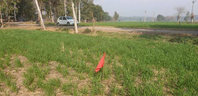 Red flags put up by the NHAI in Dera Baba Nanak to acquire land for the proposed highway of the Kartarpur Corridor. by .