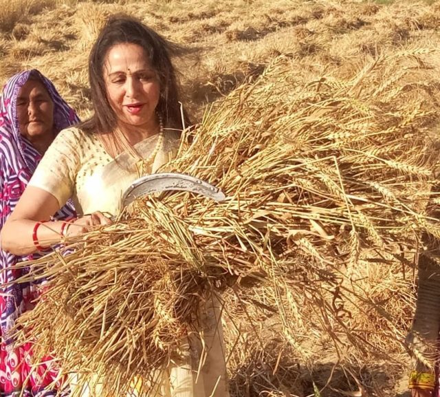 Mathura: Actress and BJP MP Hema Malini seen in a paddy field during an election campaign ahead of 2019 Lok Sabha polls, in Mathura, on March 31, 2019. (Photo: IANS) by .