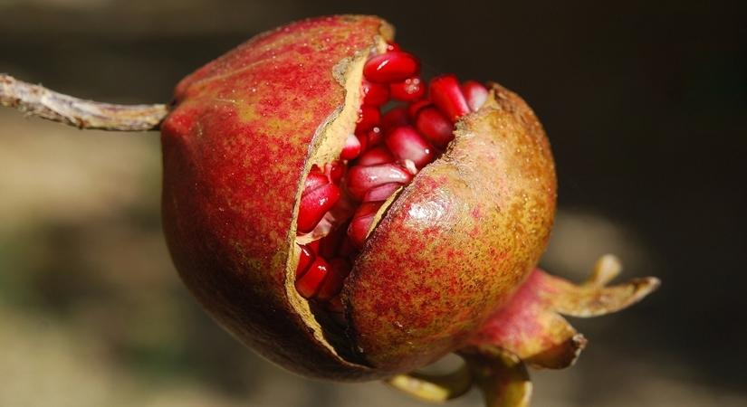 A fruitful monsoon diet!. by .